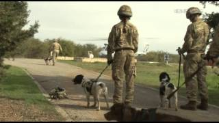 Military Dogs And Handlers Ready For Afghanistan 12.03.14