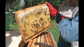 В Альметьевске пчеловоды обсудили вопросы оформления пчелиных паспортов