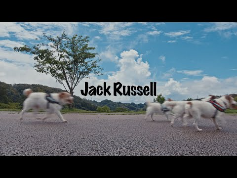 PHONO TONES 「Jack Russell」 Official Music Video