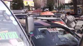 Zebras direct traffic in Bolivia