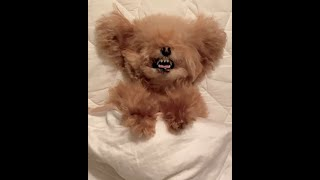 SMALL BABY PUPPIES CUTE MOMENTS