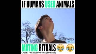 If Humans Used Animal Mating Rituals (Vine)