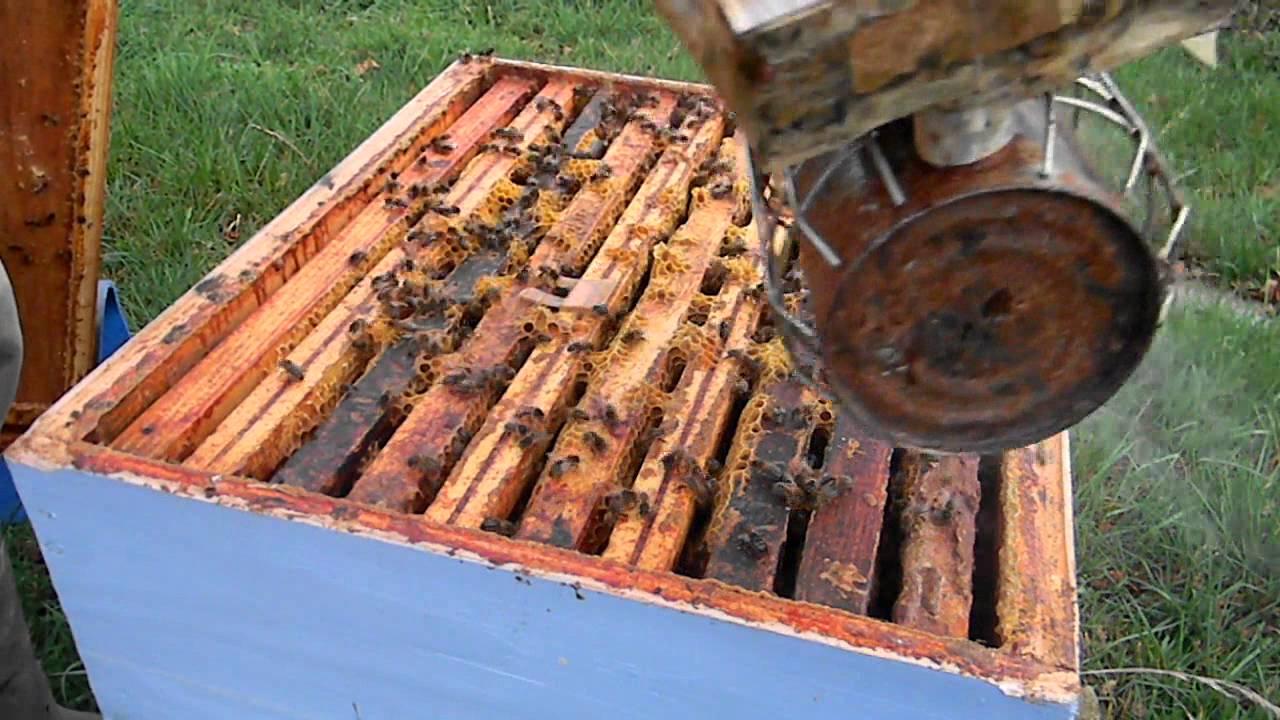 apiculture comment mettre du candy dans sa ruche youtube. Black Bedroom Furniture Sets. Home Design Ideas
