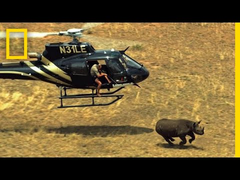 See What It Takes to Hide a Secret Tracker in a Rhino Horn | Short Film Showcase