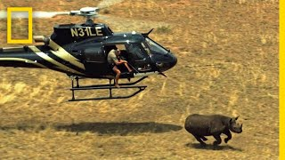 See What It Takes to Hide a Secret Tracker in a Rhino Horn | Short Film Showcase thumbnail