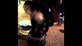 Monkey Designs Gasifier#2