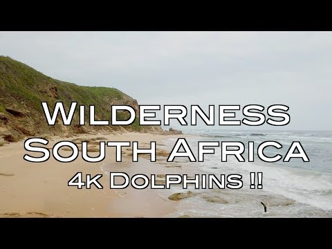 4k Dolphins - Wilderness, South Africa