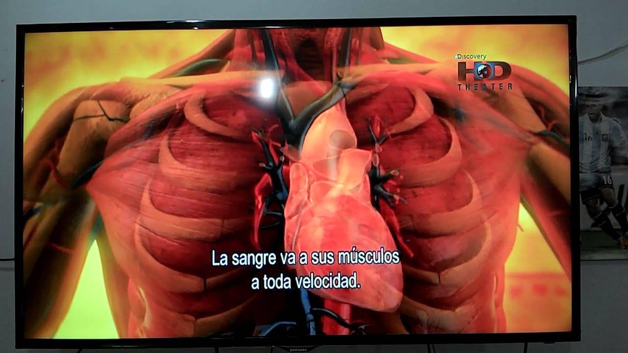 Cuerpo Humano Al Limite - ATP Reaccion Quimica - YouTube