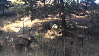 США Дикие животные штата Колорадо