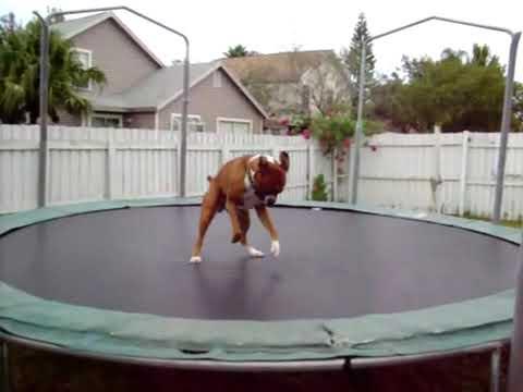 Un perro se apodera del brincolín from YouTube · Duration:  1 minutes 7 seconds