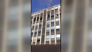 Gato salta de un edificio para salvarse de un incendio