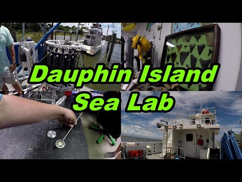Dauphin Island Sea Lab: An Inside Look