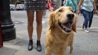 Golden Retriever 101: Life Lessons From My Dog