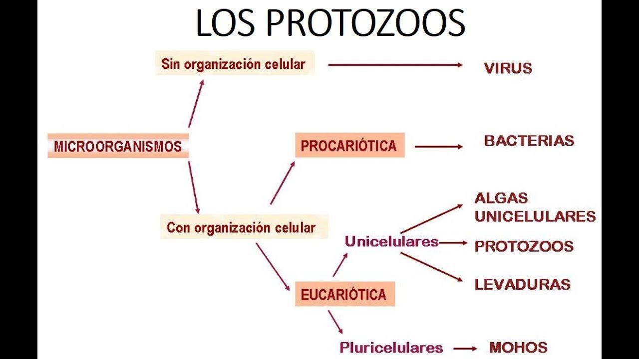que son las protozoarios