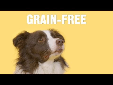 What are the Benefits of Feeding My Dog a Grain-Free Diet?