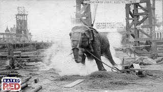 Strange Heartland History: Did Thomas Edison Really Fry an Elephant with Electricity? Video