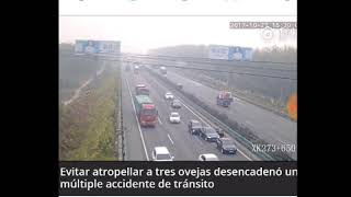 Ovejas causan multiple accidente en China
