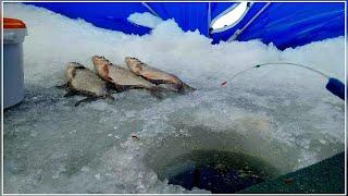 НАКОНЕЦ ТО ПОПАЛ НА БЕШЕНЫЙ КЛЕВ Подлещ на мормышку Супер рыбалка