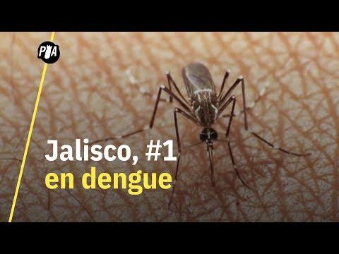Jalisco, primer lugar en casos de dengue grave