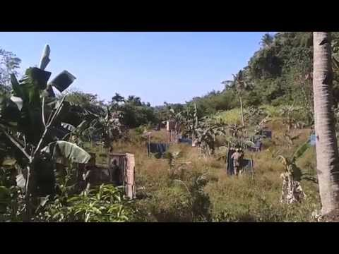 malay airsoft tactical assault group [aklan, philippines] scene 2.1