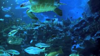 Aquarium 2hr relax music thumbnail
