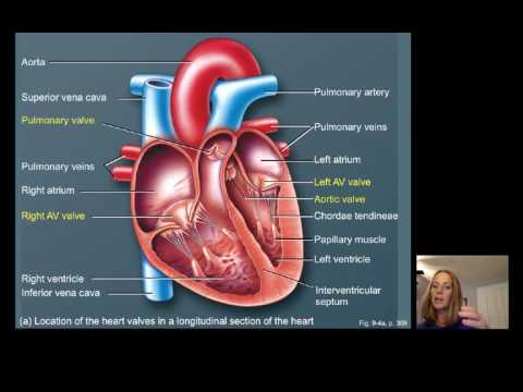 Lecture16 Cardiac Physiology