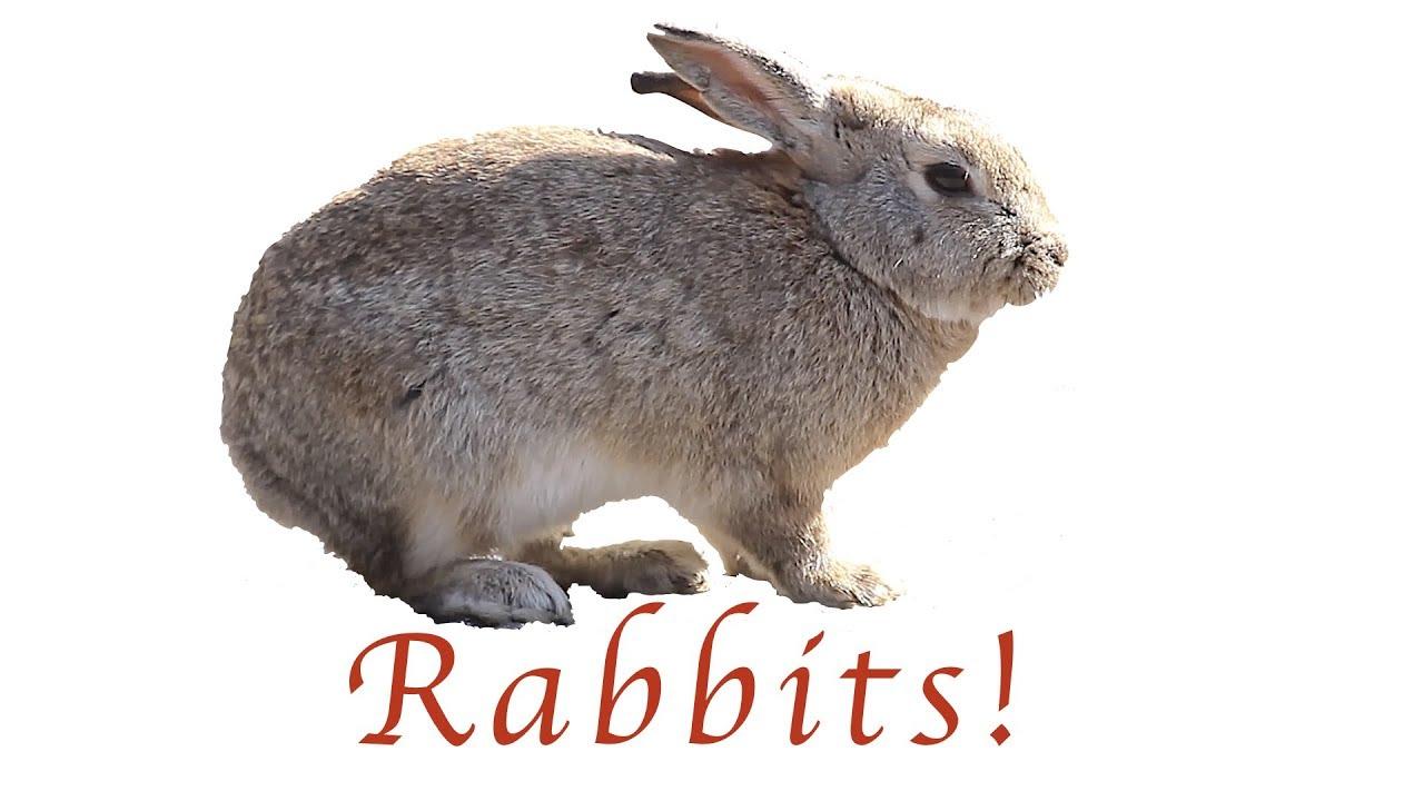 the secret of rabbit island youtube