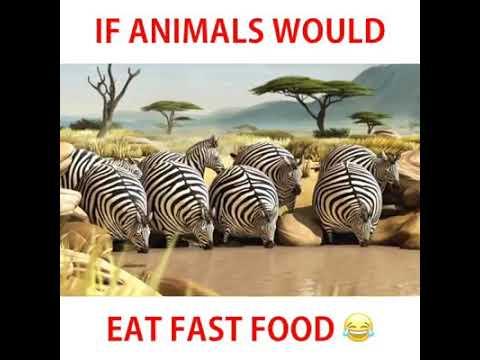 #Food | If animal eat fast food. Aaiye jante he