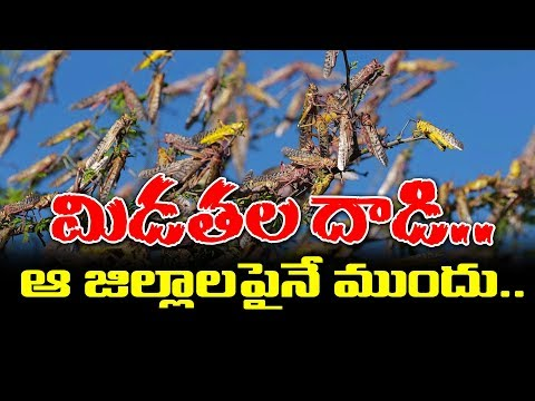 Locust Attack On Telangana Districts    Telangana Agriculture Severely Affected    SumanTV
