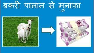 बकरी पालान से मुनाफ़ा : Profit in Goat Farming:  # By Sachin Rindhe