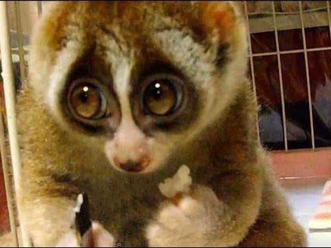 Top 10 Cute Animals That Can Kill You