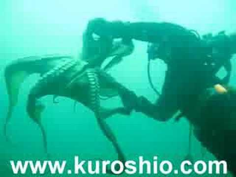 octopus vs. scuba diver - YouTube