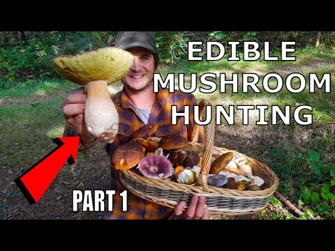 EDIBLE MUSHROOM HUNTING With A MUSHROOM EXPERT - Foraging For Cep / Porcini / Bolete / Chanterelle