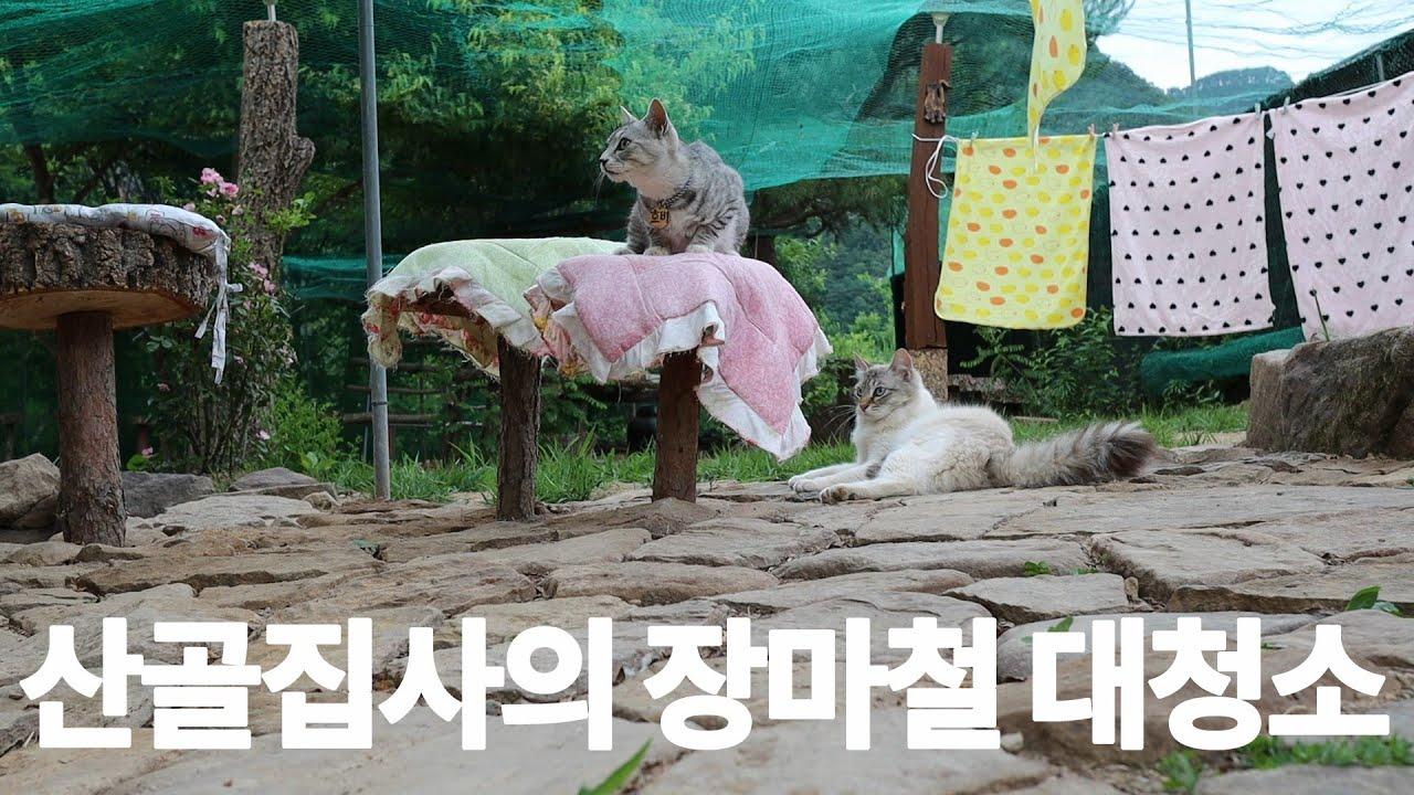 [재업로드] 산골냥이들 집 대청소(feat.하양이 예전에는 개냥이었는데...)
