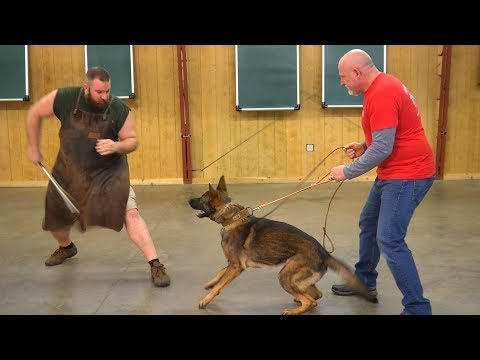 Home Raised Personal Protection Dog 'Build A Beast' Custom Trained Dogs For Sale