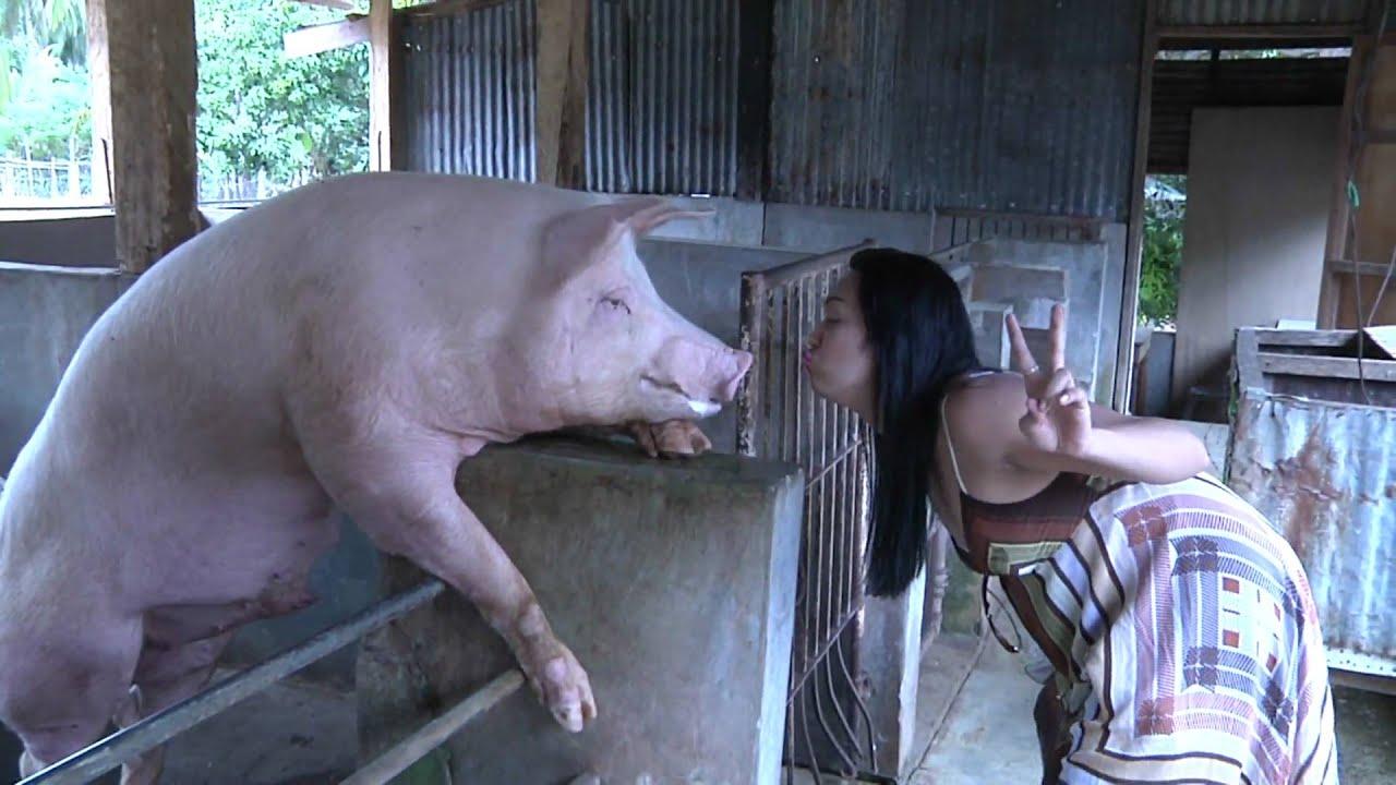 Horny Pig - Youtube-6636