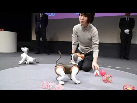 Video thumbnail of Aibo