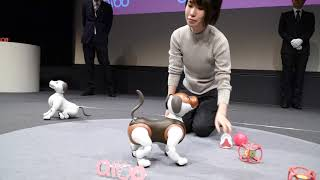 """Sony unveiled the new """"chocolator tricolor"""" version of Aibo, its ro..."""
