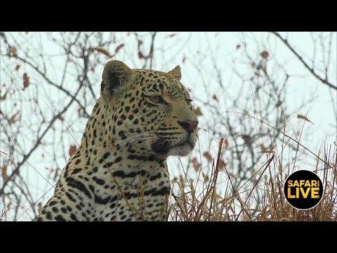 safariLIVE - Sunrise Safari - June 22, 2019