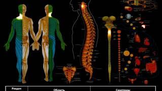 нервная система человека. лекционный материал!