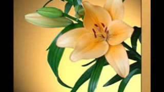 MUSICA CRISTIANA - AGRADECIMIENTO - STANISLAO MARINO