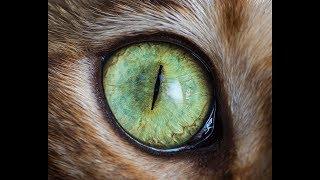 Тематическая подборка - котоприколы, прикольные картинки с котами