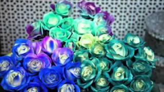 Цветы меняющие цвет(цветы-хамелеоны) шиковыештучки.рф