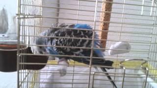 yıkanan kuş