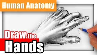 How to Draw Hands from Any Angle