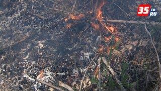 Сотрудники областной противопожарной службы рассказали, как правильно жарить шашлыки