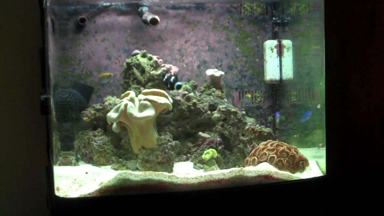29 gallon biocube introduction video youtube for Bio cube fish tank