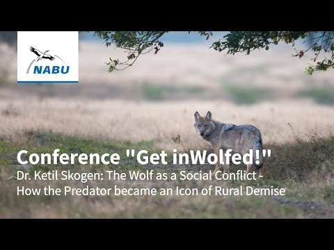 Dr. Ketil Skogen: The Wolf as a Social Conflict - How the Predator became an Icon of Rural Demise