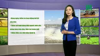VTC14   Thời tiết nông vụ 01/04/2018  thuộc khu vực Tây Nguyên và Nam Bộ trời hầu như không mưa