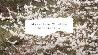 Mycelium Wisdom Connection - Guided Meditation with Meditation Drumming